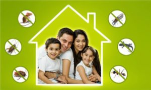 Is it safe to conduct pest control treatment in the presence of a baby at home?