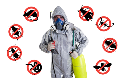 Budget-Friendly Pest control service provider in Trivandrum