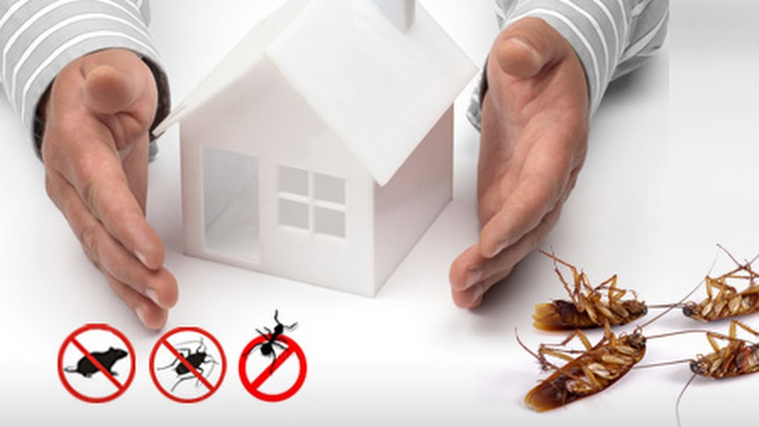 Pest Control Services in Trivandrum – Quality Service at Low cost