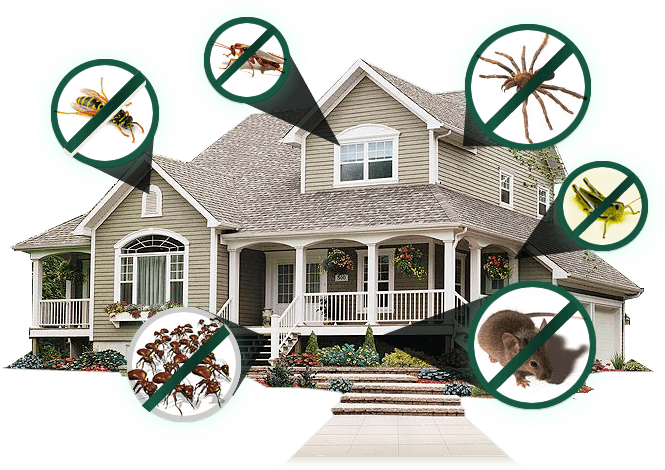 Cost-effective pest control agency nearby Trivandrum