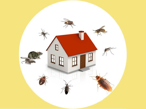 Pest Control and Sanitization for Affordable cost
