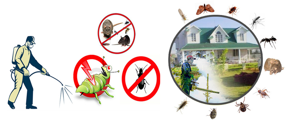 Top reason to hire a professional pest control agency in Trivandrum