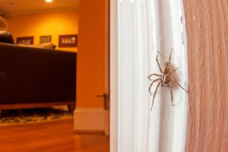 Things you should take care of while killing pest in the home