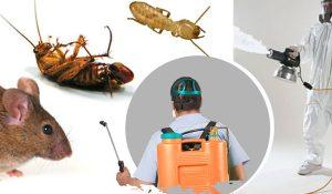 No.1 Pest Control Services in Trivandrum Kerala