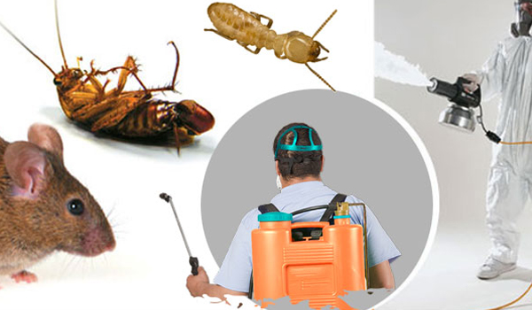 How to remove pests at home?