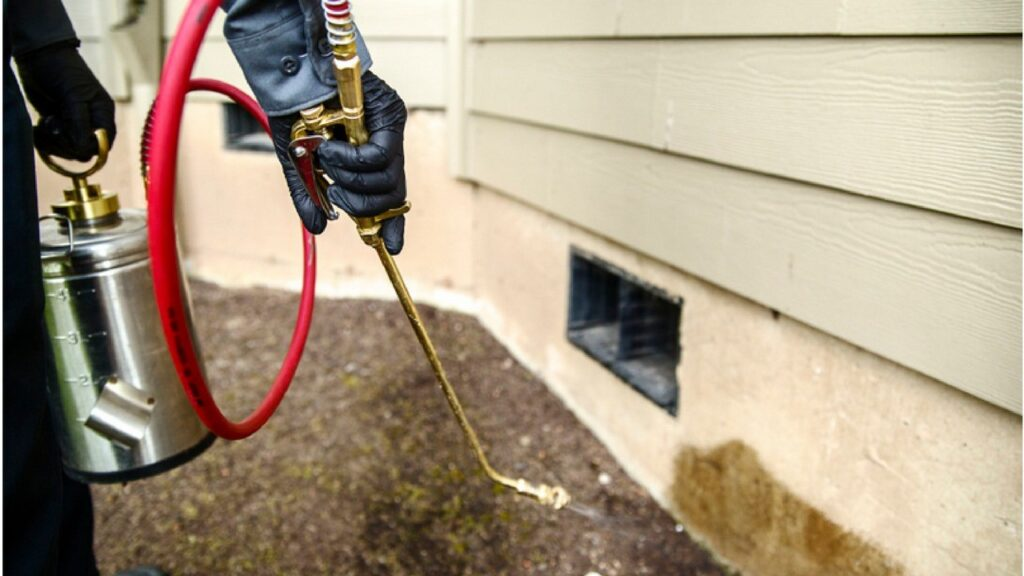 Low-cost termite control services in Trivandrum