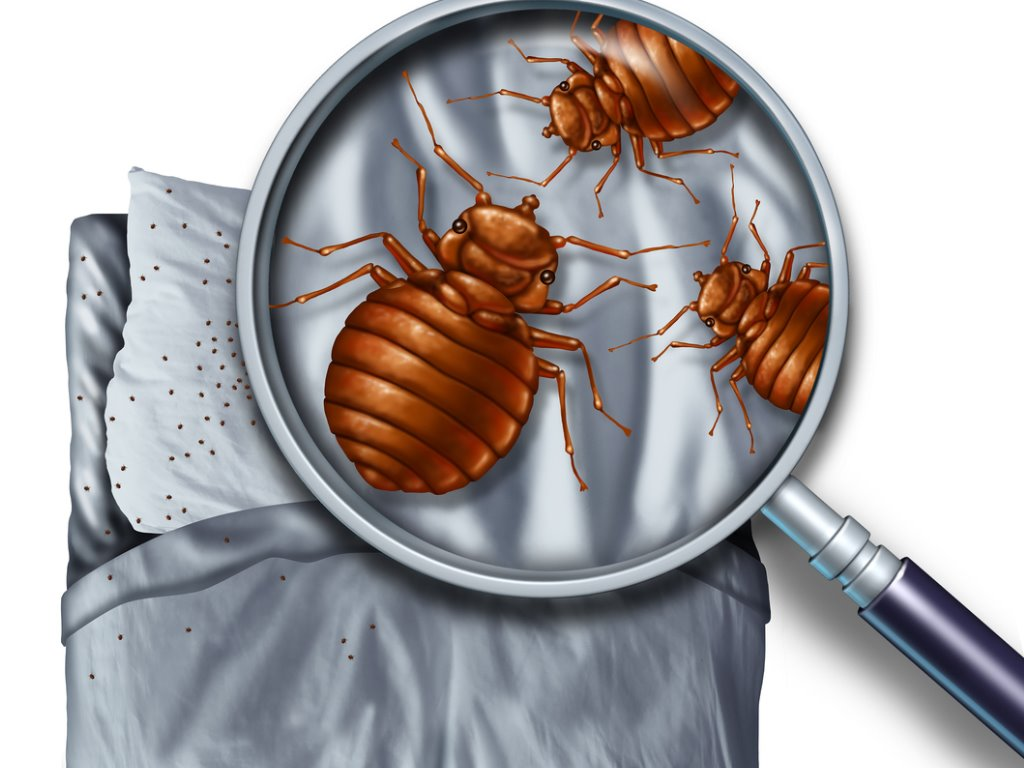 Pest removal from home using Modern methods
