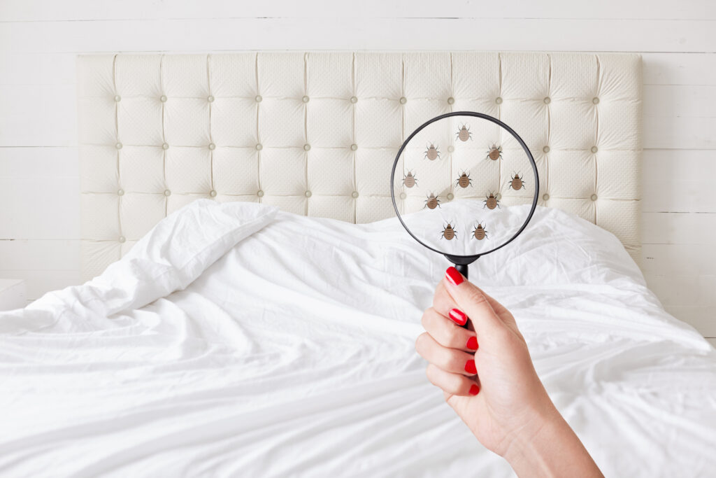 Bed bugs removal Tips